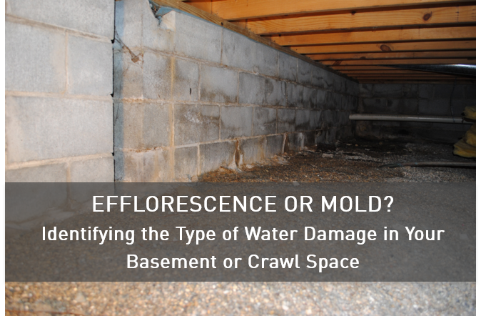 Efflorescence Or Mold Identifying The Type Of Water