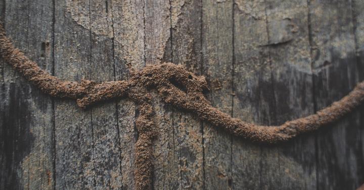 4-Subterranean-Termite-Prevention-Strategies