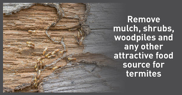 Remove-the-food-source-for-subterranean-termites