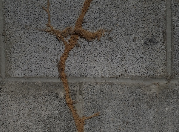 Soil-Pretreatment-Should-Protect-Common-Access-Points-for-Termites