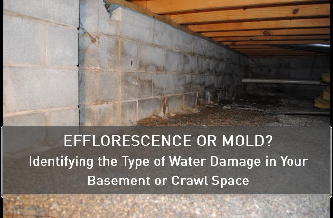 Efflorescence_or_Mold_1.png
