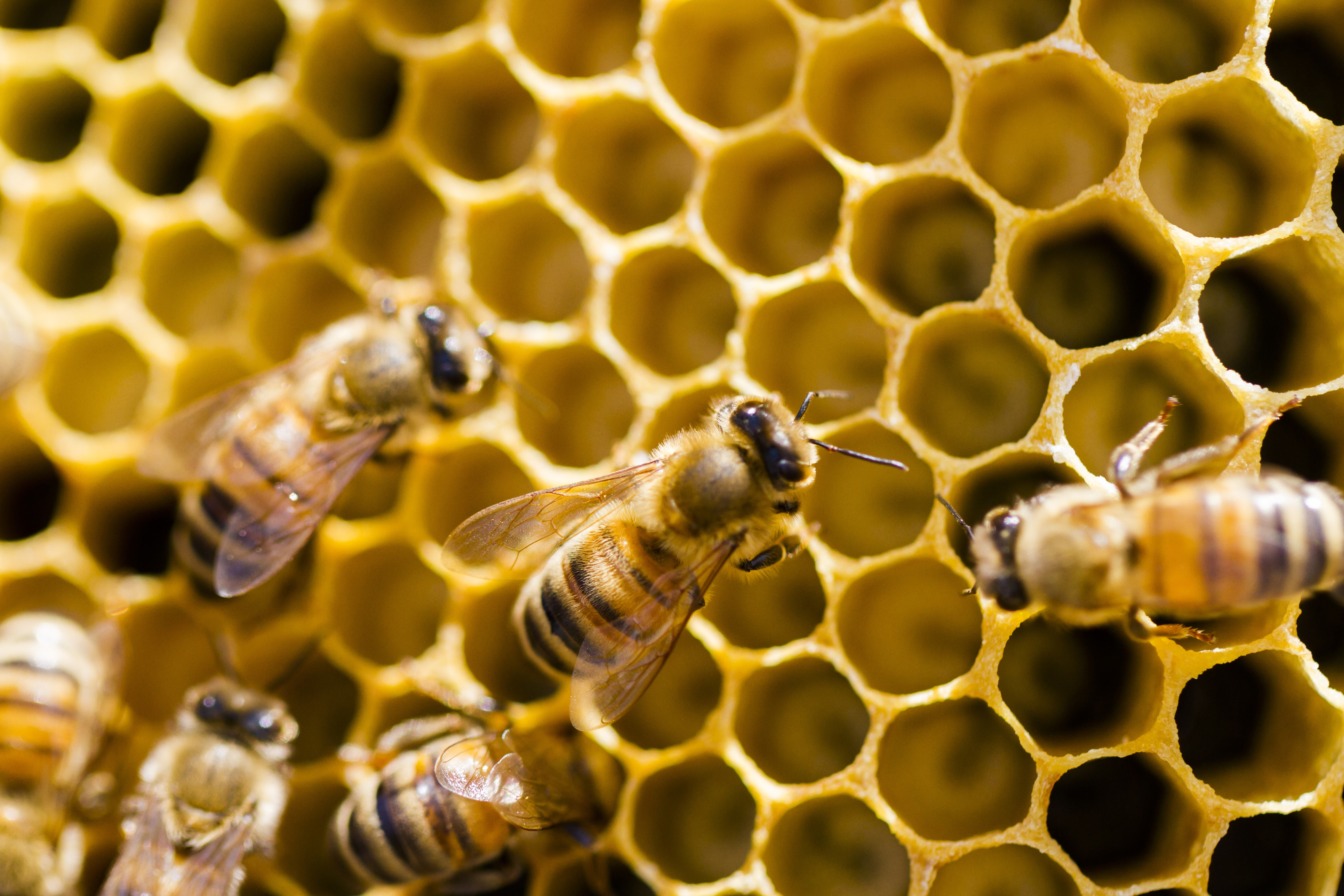 COLONY COLLAPSE DISORDER: A Cautionary Tale for Chemical Termite Treatment in New Building Construction